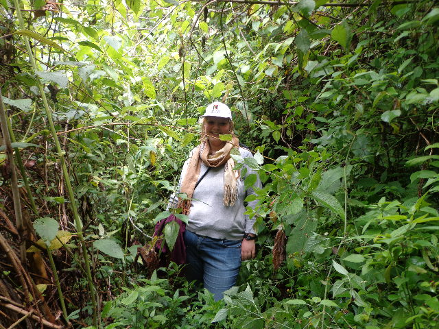 Grüße aus dem indepencianischen Dschungel